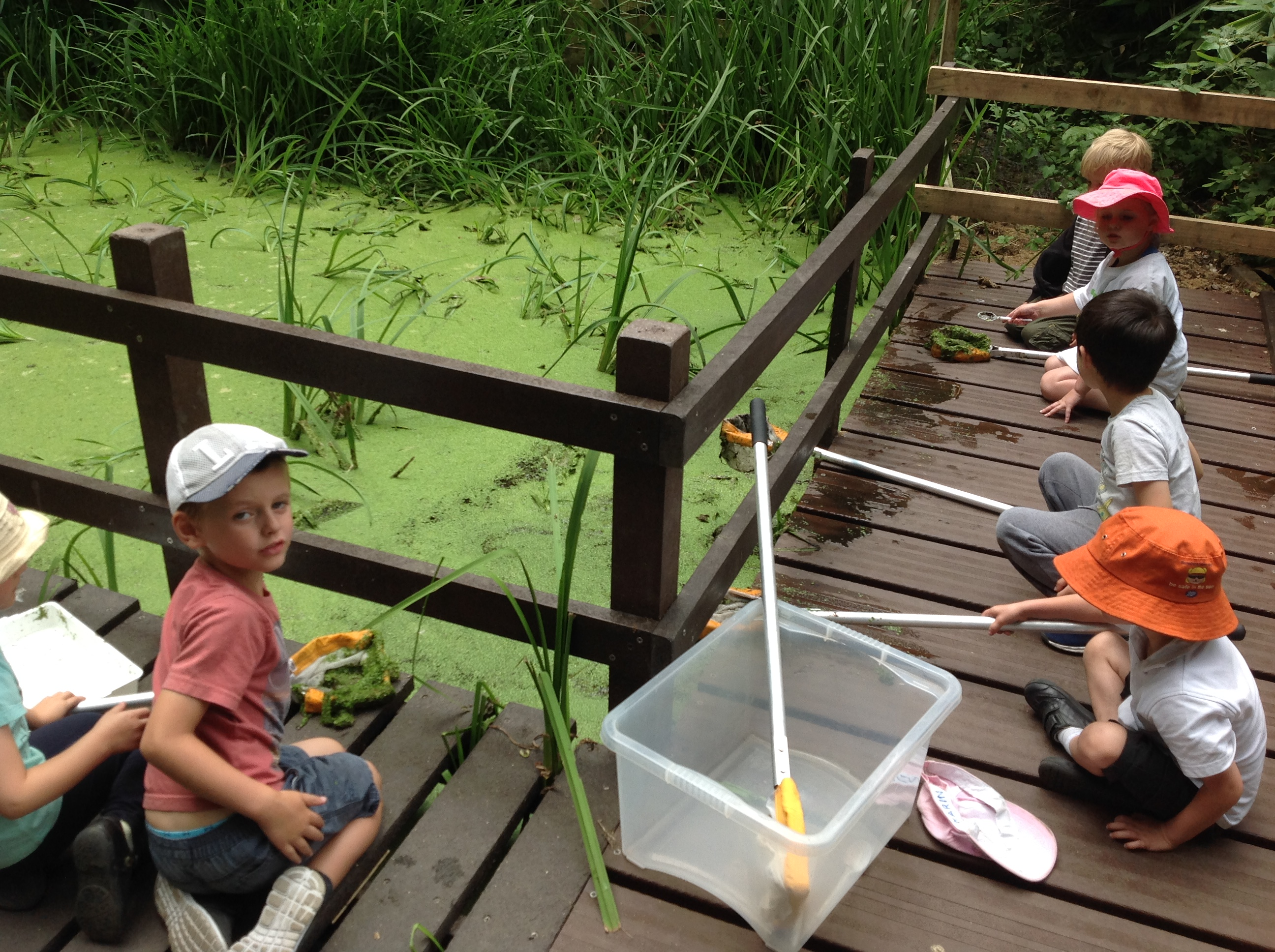 RX pond dipping